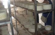 Ziegenkäse in einer Käserei auf Fuerteventura