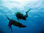 Tintenfische