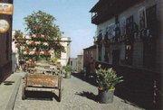 Weihnachtssterne und Strelitzien in La Orotava
