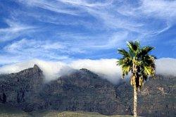 Bergkulisse mit Palme