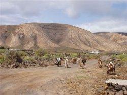 Reiten auf Lanzarote