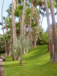 Bilder vom Loro Parque auf Teneriffa