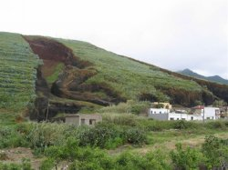 einheimische Pflanzen auf Teneriffa