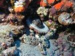 Nautic Dive - Unterwasserwelt: Riffe