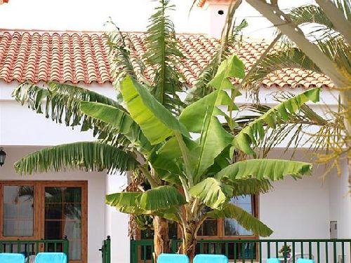 Ferienwohnung Villa de la Palmerita - 3SZ - Gran Canaria