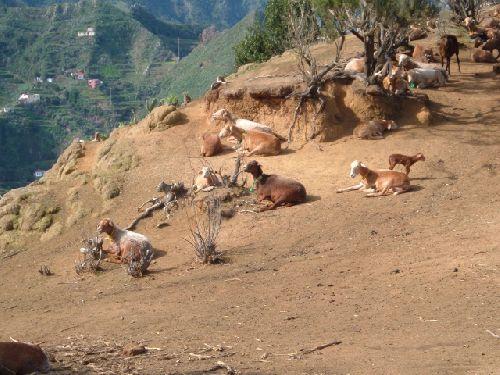 Wandern nach Chinamada auf Teneriffa