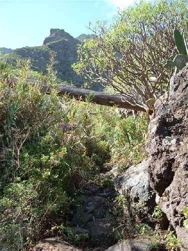 Baumstamm liegt über dem Weg am Risco Steig