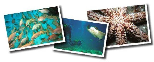 Tauchen am Fünf Sterne Riff auf Teneriffa