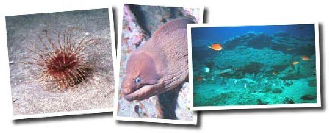 Tauchen am Aquarium auf Teneriffa
