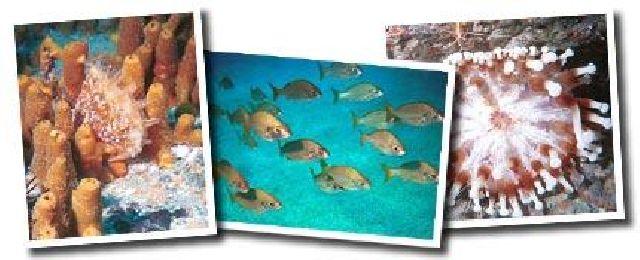 Tauchen am Gorgonen Riff auf Teneriffa