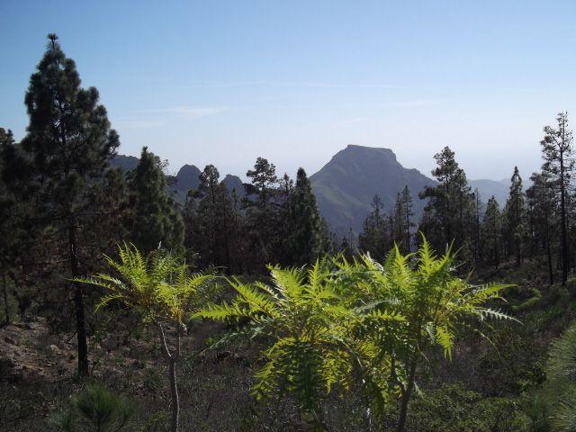 Blick zum Mesa del Conde und Playa de las Américas