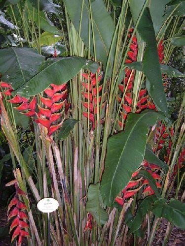 Botanischer Garten Teneriffa Bild1