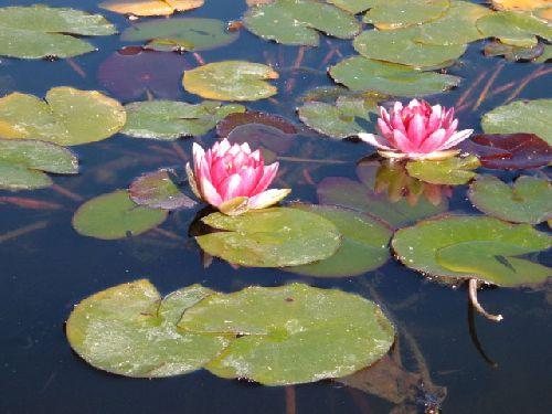 Botanischer Garten Teneriffa Bild21
