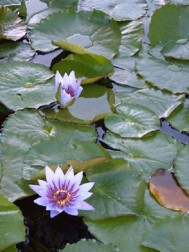 Botanischer Garten Teneriffa Bild22
