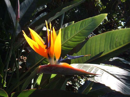 Botanischer Garten Teneriffa Bild24