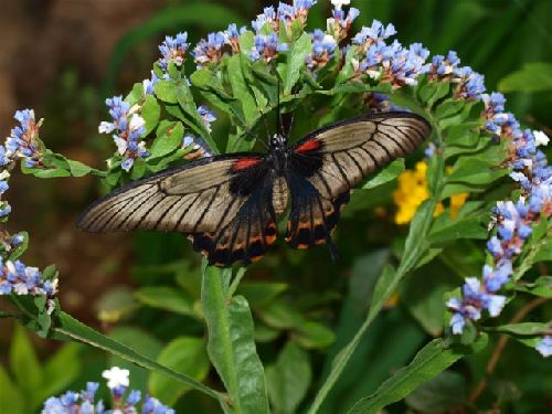 Schmetterlingspark auf Teneriffa