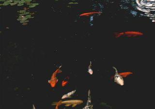 Wassersport auf Teneriffa - Angeln - Bild8