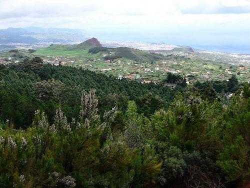 Wandern durch den Esperanzawald auf Teneriffa