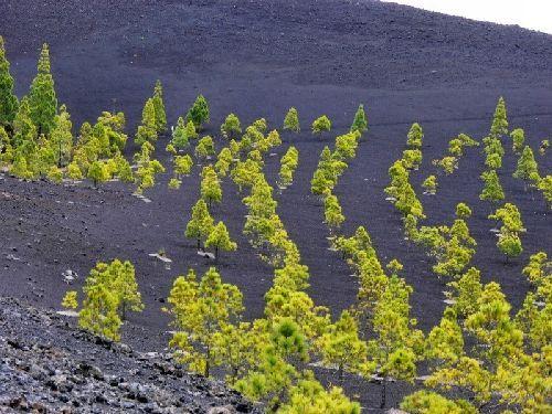 Wandern zum Vulkan bei Garachico auf Teneriffa
