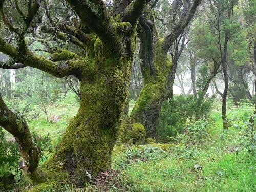 Wandern hoch über der Mascaschlucht auf Teneriffa