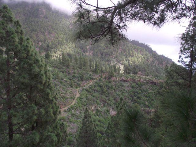 Wanderweg durch den Wald auf Teneriffa