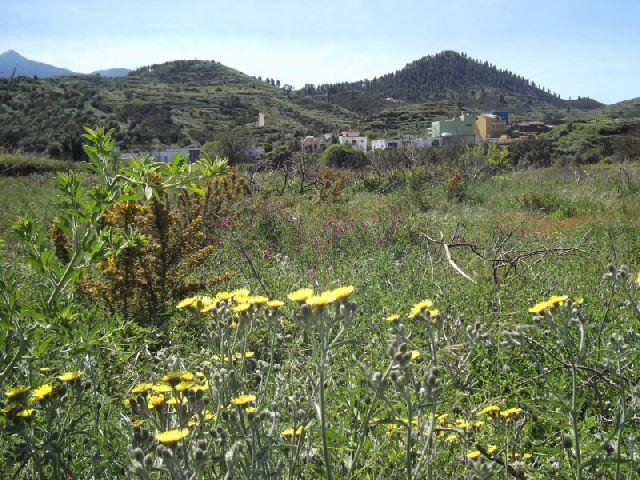 Wandern im Gebiet von Monte Del Agua bei Erjos im Teno auf Teneriffa