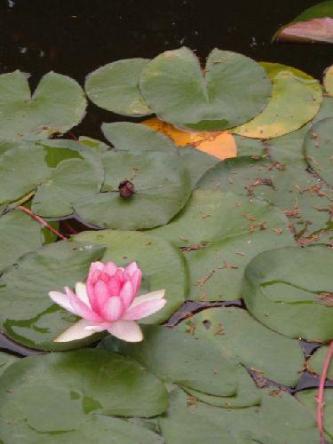 Botanischer Garten Teneriffa Bild2