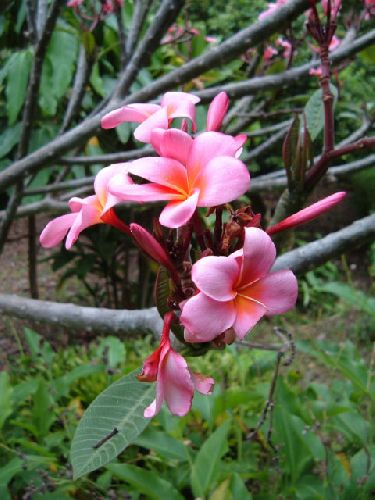 Botanischer Garten Teneriffa Bild7