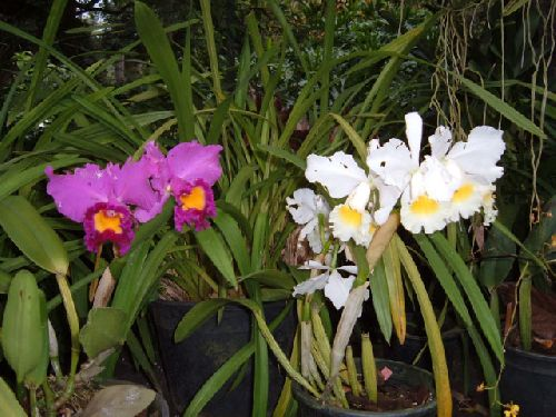 Botanischer Garten Teneriffa Bild8