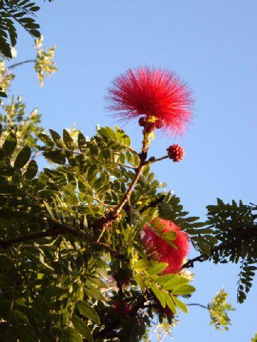 Botanischer Garten Teneriffa Bild10