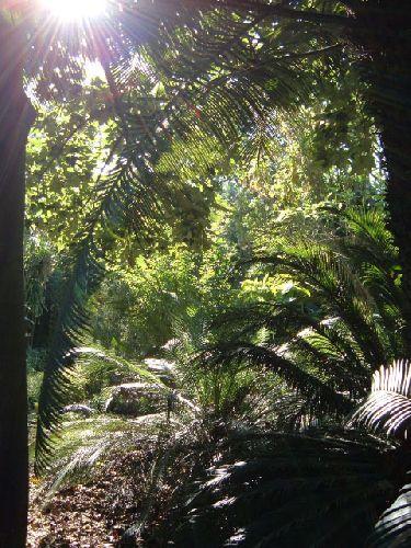 Botanischer Garten Teneriffa Bild16